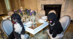Cachorro da família Obama morre e ex-presidente faz homenagem nas redes sociais